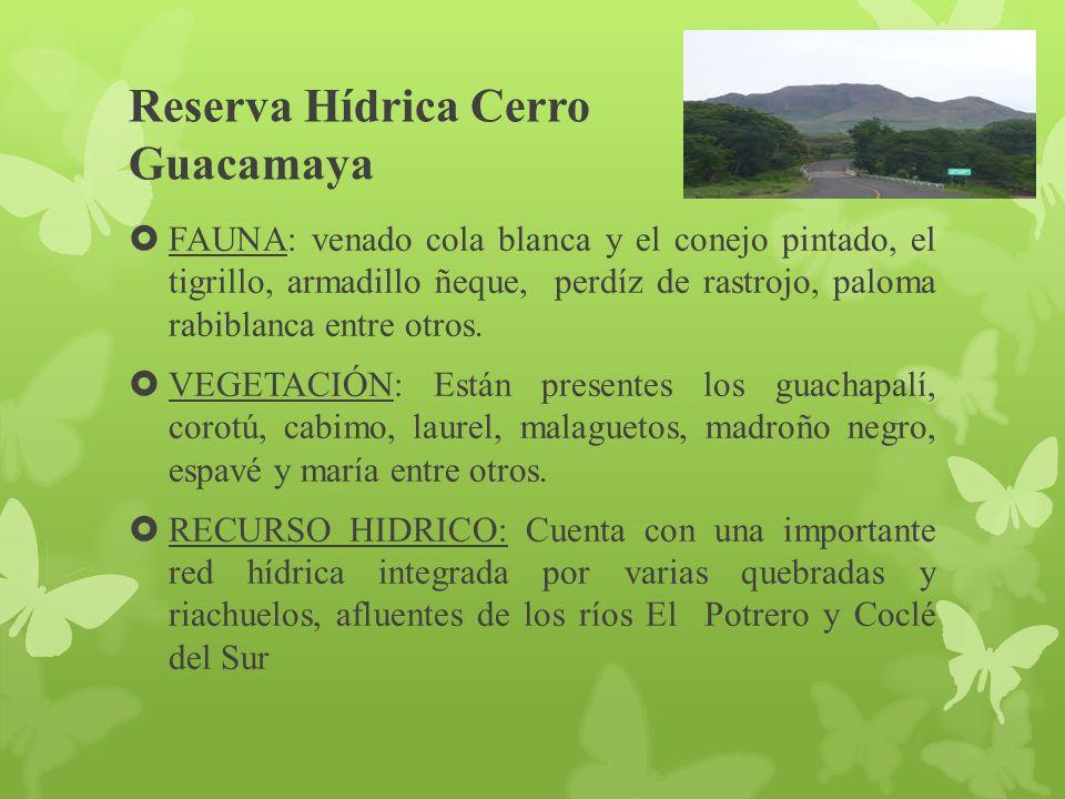 Reserva Hídrica Cerro Guacamaya FAUNA: venado cola blanca y el conejo pintado, el tigrillo, armadillo ñeque, perdíz de rastrojo, paloma rabiblanca entre otros.