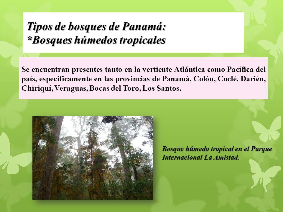 Tipos de bosques de Panamá: *Bosques húmedos tropicales Se encuentran presentes tanto en la vertiente Atlántica como Pacífica del país, específicamente en las provincias de Panamá, Colón, Coclé, Darién, Chiriquí, Veraguas, Bocas del Toro, Los Santos.