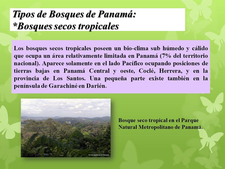 Tipos de Bosques de Panamá: *Bosques secos tropicales Los bosques secos tropicales poseen un bio-clima sub húmedo y cálido que ocupa un área relativam