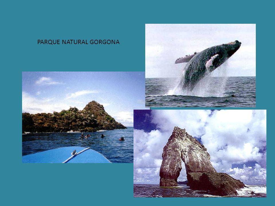 PARQUE NATURAL GORGONA