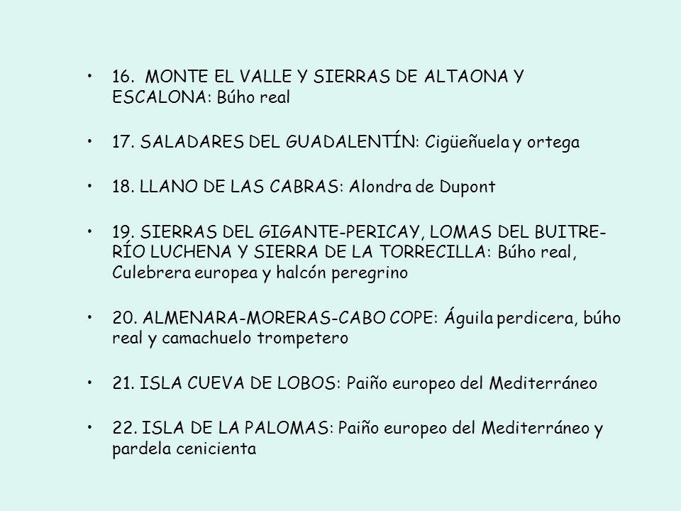 8. ISLAS HORMIGAS: Paiño europeo del Mediterráneo 9. SIERRA DE RICOTE Y LA NAVELA: Halcón común y búho real 10. SIERRADE MOJANTES: Buitre leonado 11.