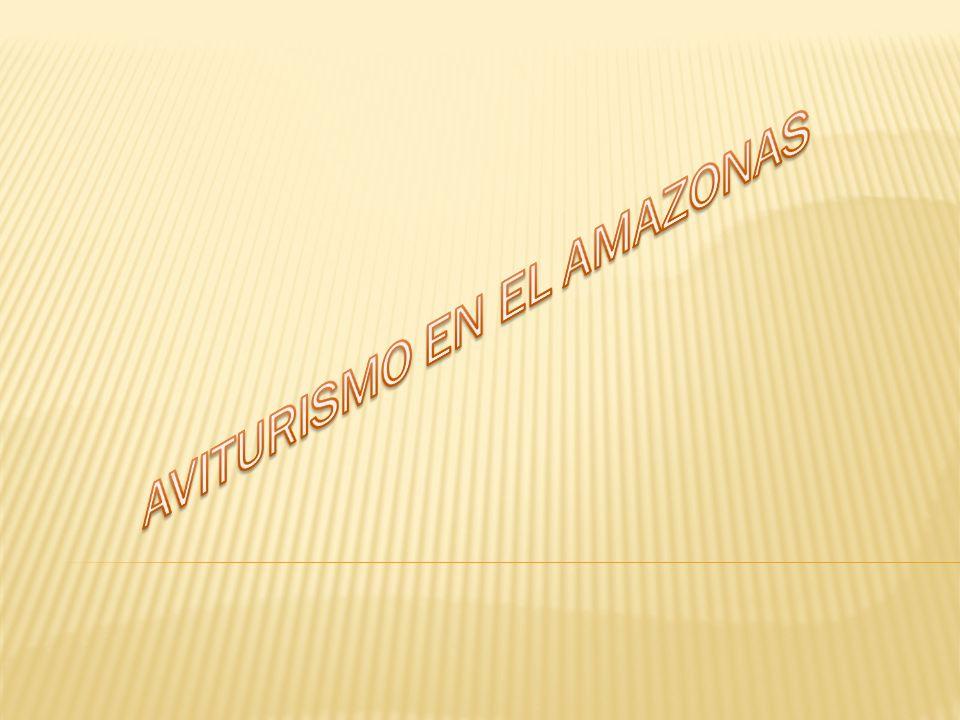 PROYECTO CONVERGENCIA TEGNOLOGICA ANDREA GOMEZ CATALINA GARZÓN