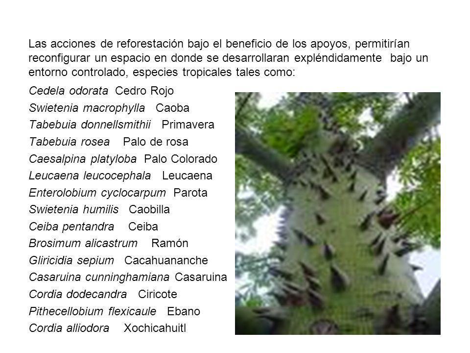 Las acciones de reforestación bajo el beneficio de los apoyos, permitirían reconfigurar un espacio en donde se desarrollaran expléndidamente bajo un e