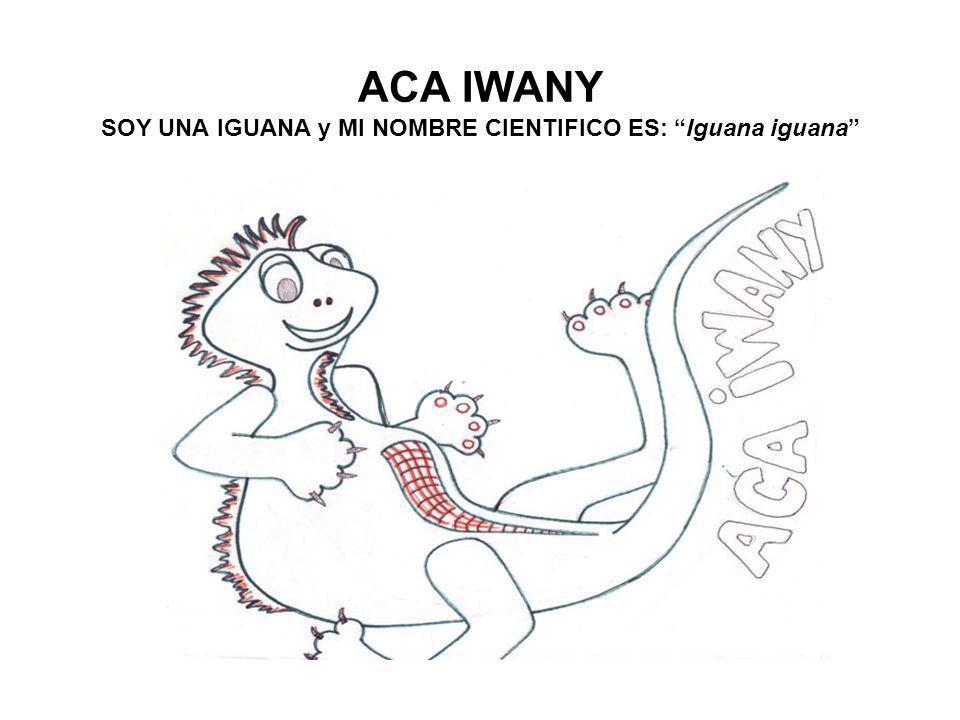 ACA IWANY SOY UNA IGUANA y MI NOMBRE CIENTIFICO ES: Iguana iguana