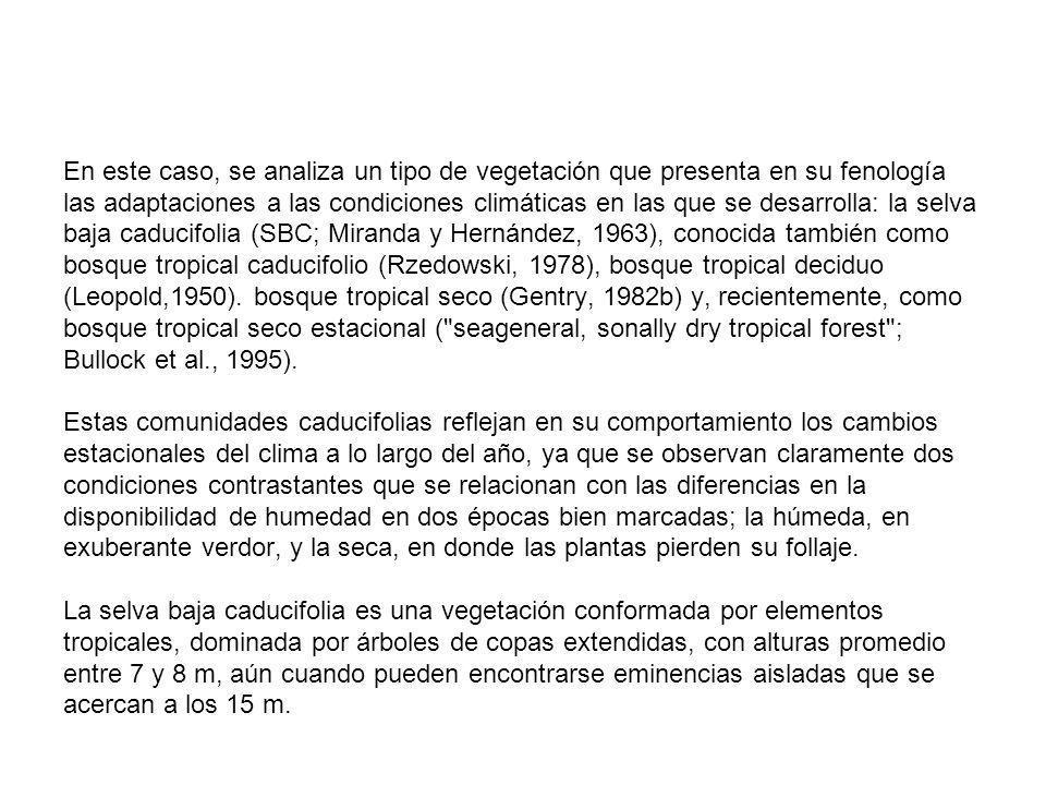 En este caso, se analiza un tipo de vegetación que presenta en su fenología las adaptaciones a las condiciones climáticas en las que se desarrolla: la