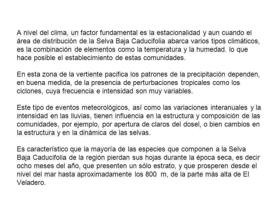 A nivel del clima, un factor fundamental es la estacionalidad y aun cuando el área de distribución de la Selva Baja Caducifolia abarca varios tipos cl