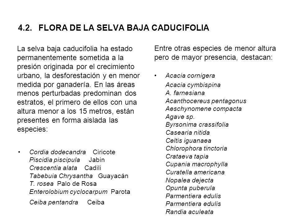 4.2. FLORA DE LA SELVA BAJA CADUCIFOLIA La selva baja caducifolia ha estado permanentemente sometida a la presión originada por el crecimiento urbano,