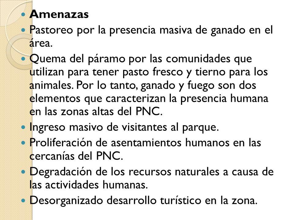 SELECCIÓN DE LOS PROBLEMAS AMBIENTALES EN EL PNC Pastoreo (malas prácticas de uso del suelo) Erosión Malas prácticas de los turistas (generación de residuos) Contaminación hídrica Pesca y Caza ilegal Quema de pajonales