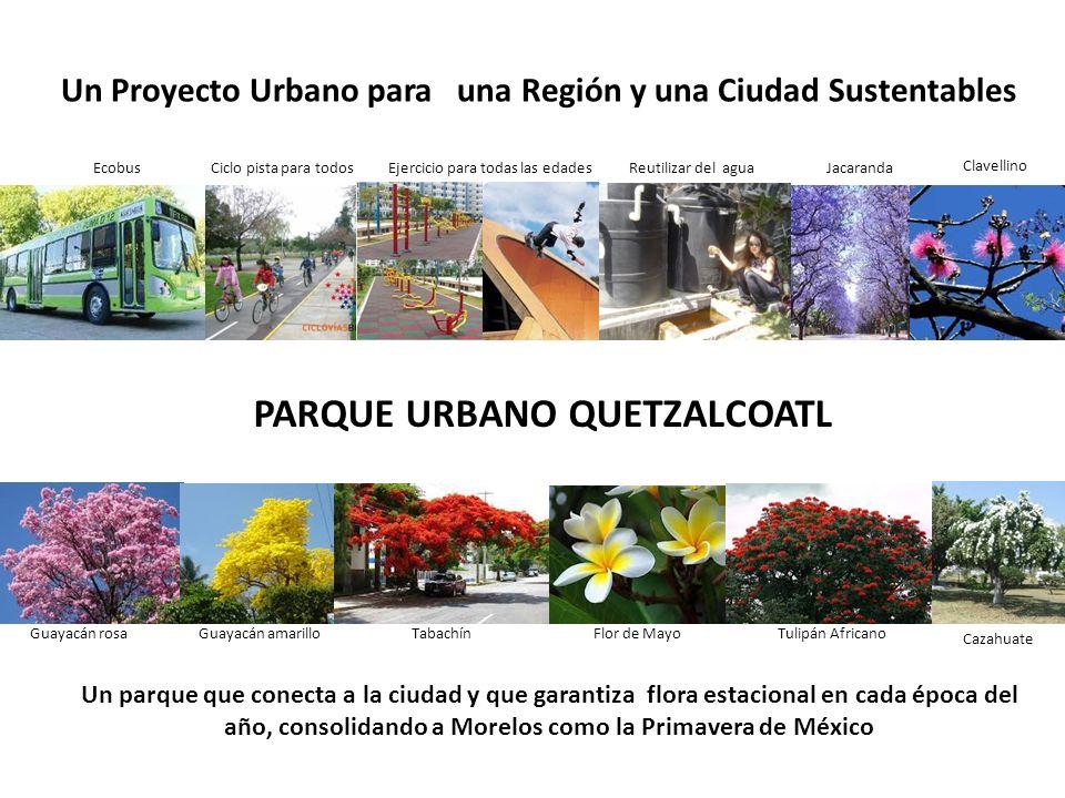 Vialidad primaria CUERANAVACA JIUTEPEC TEMIXCO EcobusCiclo pista para todos Ejercicio para todas las edades Reutilizar del agua Un parque que conecta a la ciudad y que garantiza flora estacional en cada época del año, consolidando a Morelos como la Primavera de México Jacaranda Clavellino Guayacán rosaGuayacán amarilloTabachínFlor de MayoTulipán Africano Cazahuate PARQUE URBANO QUETZALCOATL Un Proyecto Urbano para una Región y una Ciudad Sustentables