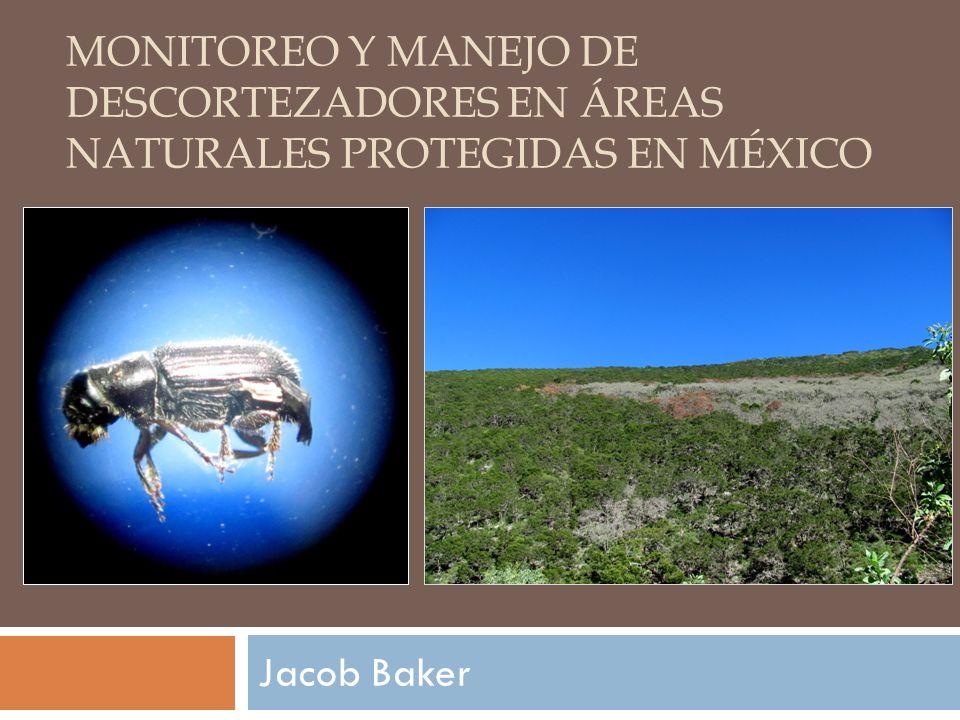 MONITOREO Y MANEJO DE DESCORTEZADORES EN ÁREAS NATURALES PROTEGIDAS EN MÉXICO Jacob Baker