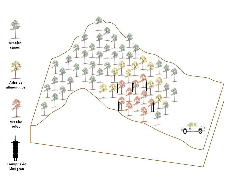 Opciones de Control… Norma Oficial Mexicana NOM-019-SEMARNAT- 2006: Que establece los lineamientos técnicos de los métodos para el combate y control de insectos descortezodores.
