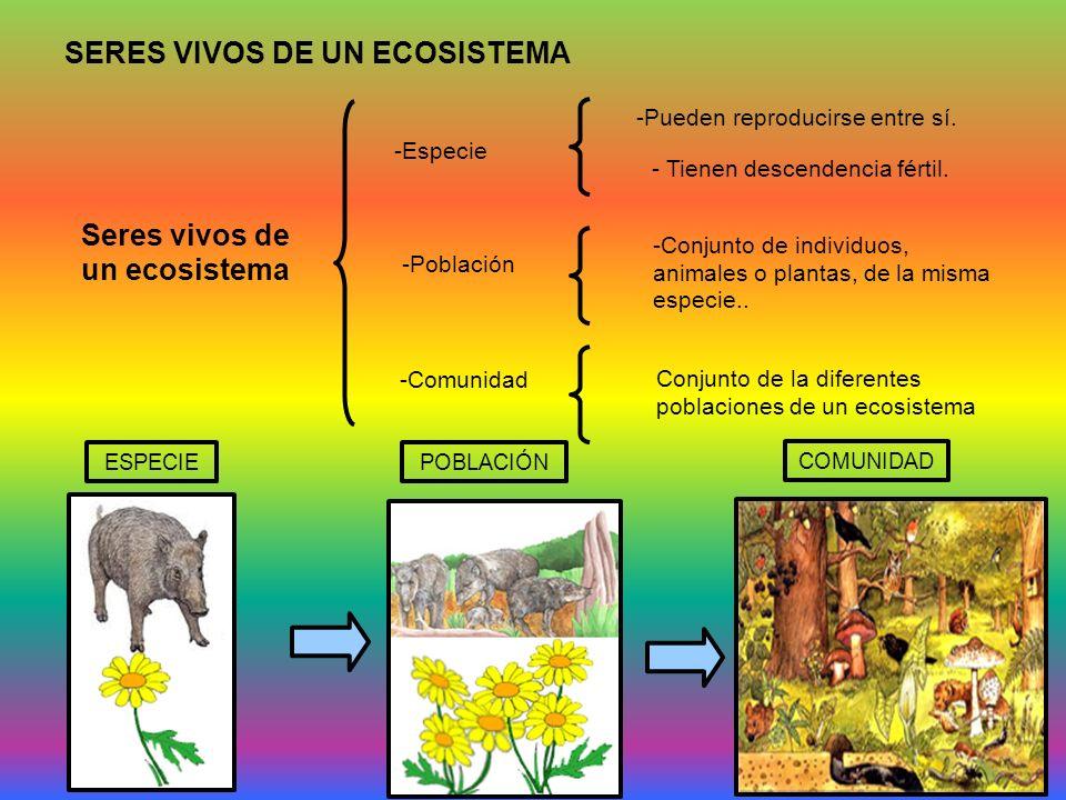 SERES VIVOS DE UN ECOSISTEMA Seres vivos de un ecosistema -Especie -Pueden reproducirse entre sí. - Tienen descendencia fértil. -Población -Conjunto d