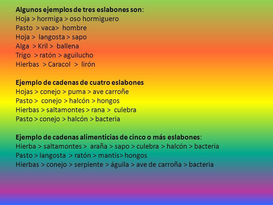 Algunos ejemplos de tres eslabones son: Hoja > hormiga > oso hormiguero Pasto > vaca> hombre Hoja > langosta > sapo Alga > Kril > ballena Trigo > ratón > aguilucho Hierbas > Caracol > lirón Ejemplo de cadenas de cuatro eslabones Hojas > conejo > puma > ave carroñe Pasto > conejo > halcón > hongos Hierbas > saltamontes > rana > culebra Pasto > conejo > halcón > bacteria Ejemplo de cadenas alimenticias de cinco o más eslabones: Hierba > saltamontes > araña > sapo > culebra > halcón > bacteria Pasto > langosta > ratón > mantis> hongos Hierbas > conejo > serpiente > águila > ave de carroña > bacteria