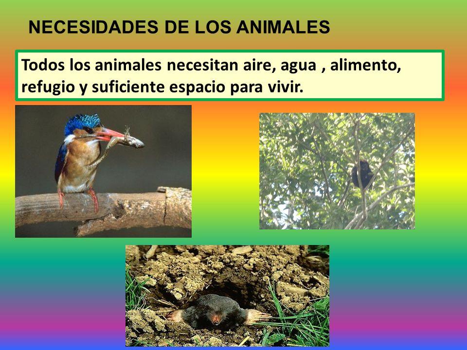 NECESIDADES DE LOS ANIMALES Todos los animales necesitan aire, agua, alimento, refugio y suficiente espacio para vivir.