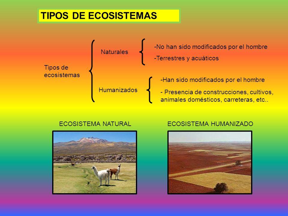 TIPOS DE ECOSISTEMAS Tipos de ecosistemas Naturales Humanizados -No han sido modificados por el hombre -Terrestres y acuáticos -Han sido modificados por el hombre - Presencia de construcciones, cultivos, animales domésticos, carreteras, etc..