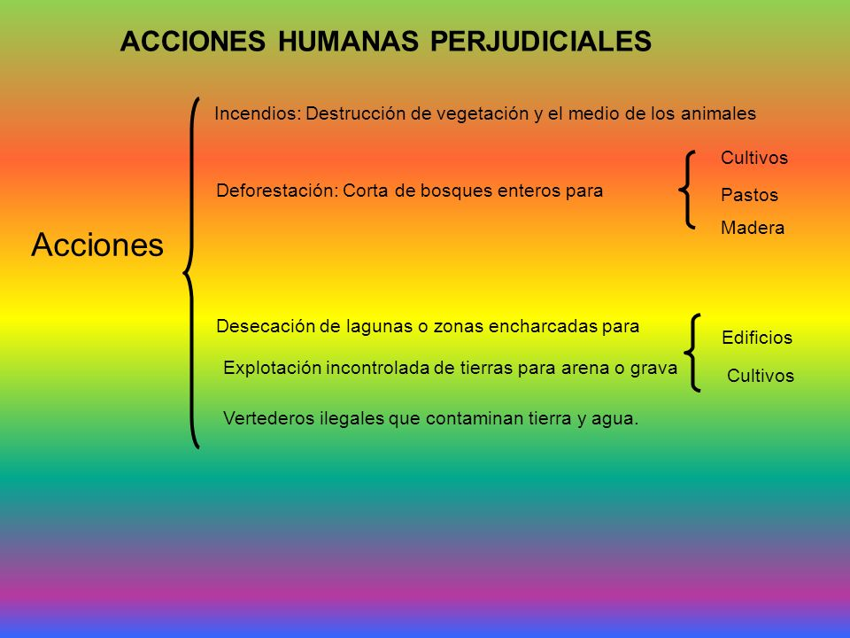 ACCIONES HUMANAS PERJUDICIALES Acciones Incendios: Destrucción de vegetación y el medio de los animales Deforestación: Corta de bosques enteros para C