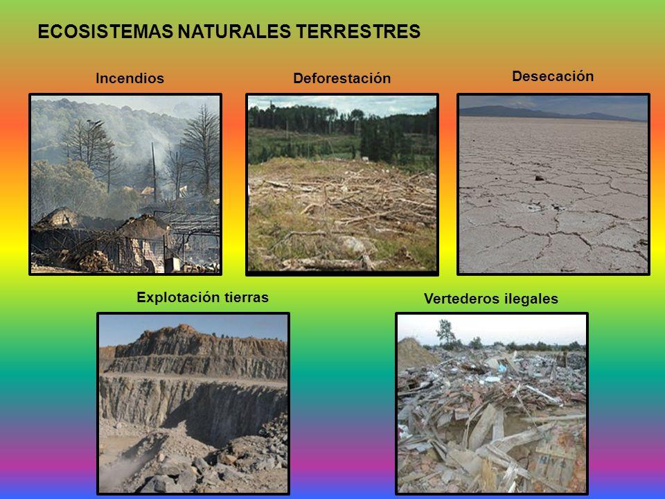ECOSISTEMAS NATURALES TERRESTRES Incendios Deforestación Desecación Vertederos ilegales Explotación tierras