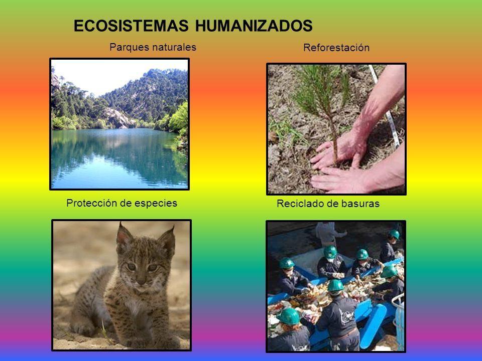 ECOSISTEMAS HUMANIZADOS Parques naturales Reforestación Protección de especies Reciclado de basuras