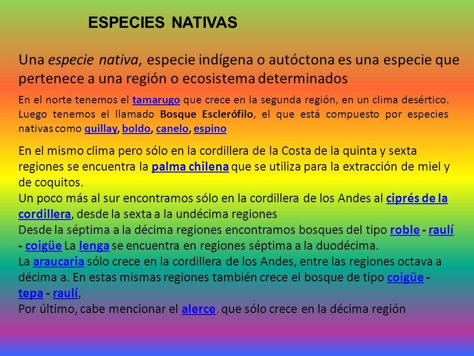 Una especie nativa, especie indígena o autóctona es una especie que pertenece a una región o ecosistema determinados ESPECIES NATIVAS En el norte tenemos el tamarugo que crece en la segunda región, en un clima desértico.
