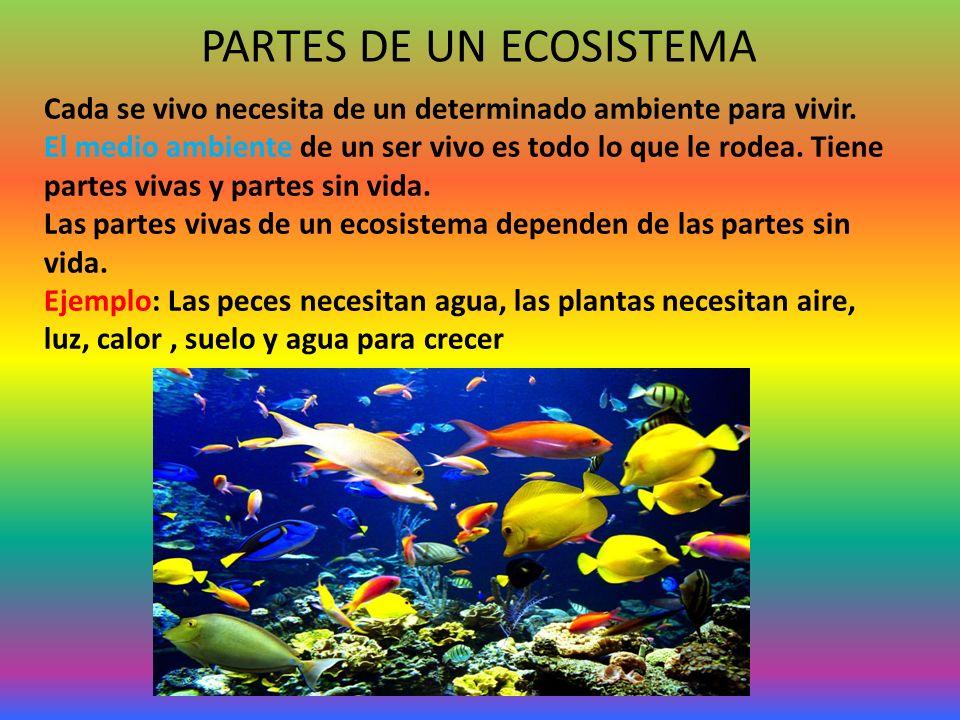 PARTES DE UN ECOSISTEMA Cada se vivo necesita de un determinado ambiente para vivir. El medio ambiente de un ser vivo es todo lo que le rodea. Tiene p