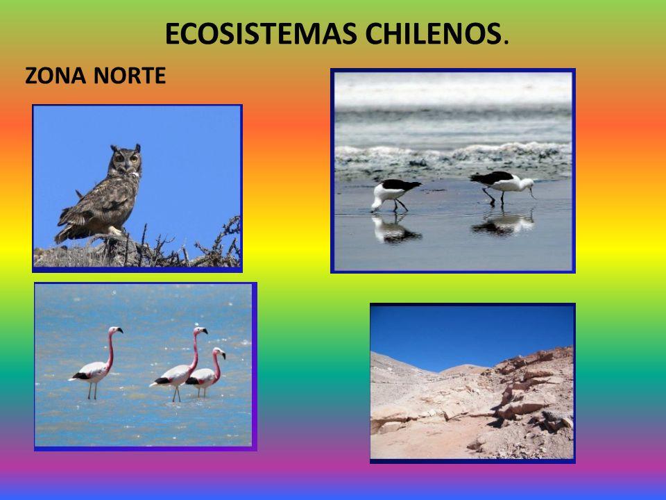 ECOSISTEMAS CHILENOS. ZONA NORTE