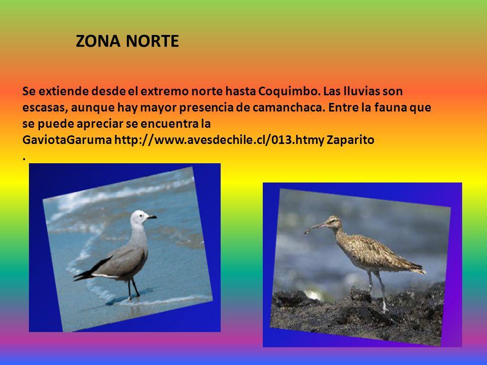 Se extiende desde el extremo norte hasta Coquimbo. Las lluvias son escasas, aunque hay mayor presencia de camanchaca. Entre la fauna que se puede apre