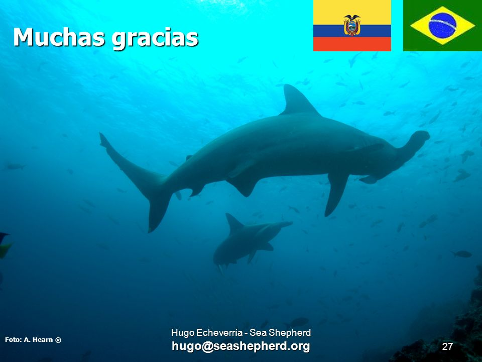 Muchas gracias Foto: A. Hearn ® 27 Hugo Echeverría - Sea Shepherd hugo@seashepherd.org