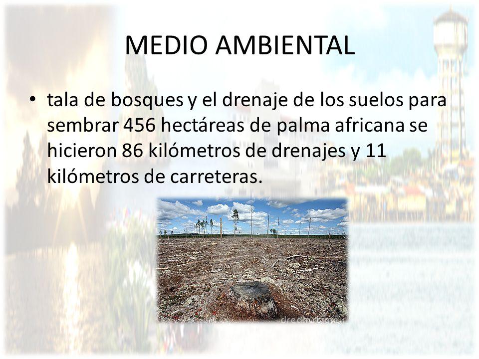 MEDIO AMBIENTAL tala de bosques y el drenaje de los suelos para sembrar 456 hectáreas de palma africana se hicieron 86 kilómetros de drenajes y 11 kil
