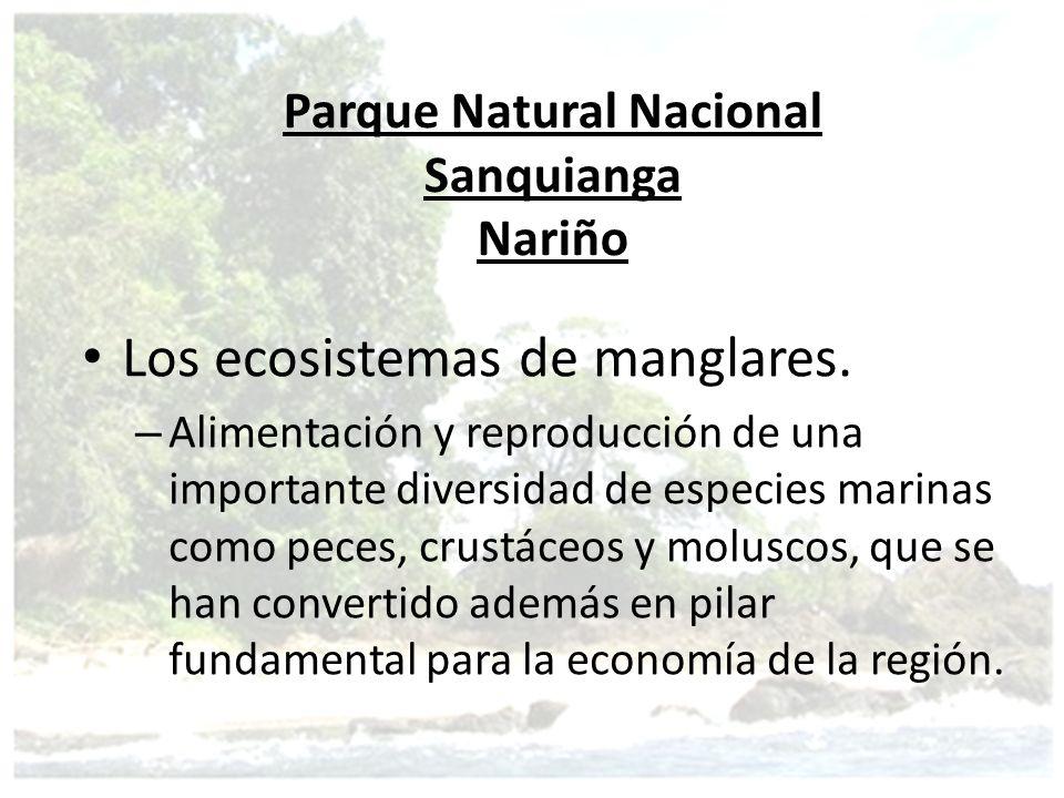 Los ecosistemas de manglares. – Alimentación y reproducción de una importante diversidad de especies marinas como peces, crustáceos y moluscos, que se