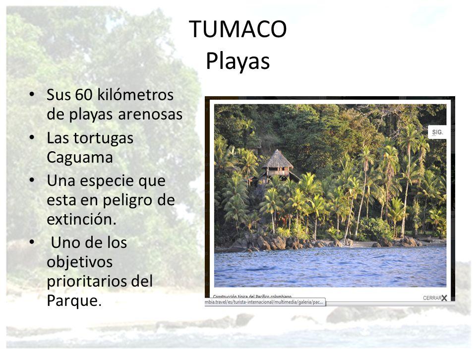 TUMACO Playas Sus 60 kilómetros de playas arenosas Las tortugas Caguama Una especie que esta en peligro de extinción. Uno de los objetivos prioritario