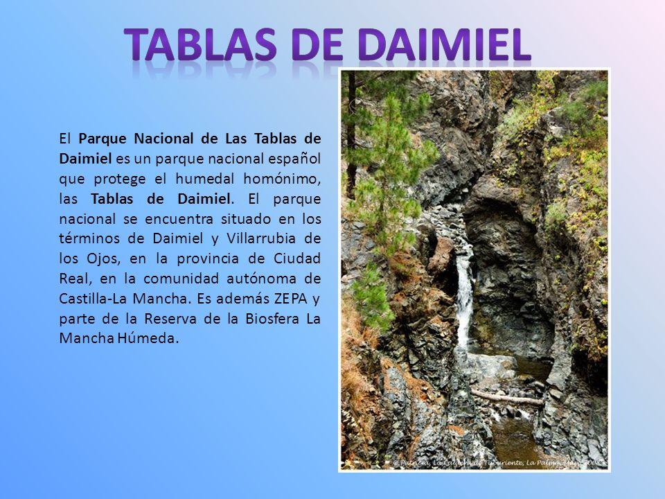 El Parque Nacional de Las Tablas de Daimiel es un parque nacional español que protege el humedal homónimo, las Tablas de Daimiel.