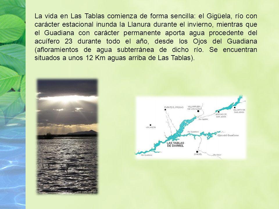 La vida en Las Tablas comienza de forma sencilla: el Gigüela, río con carácter estacional inunda la Llanura durante el invierno, mientras que el Guadi