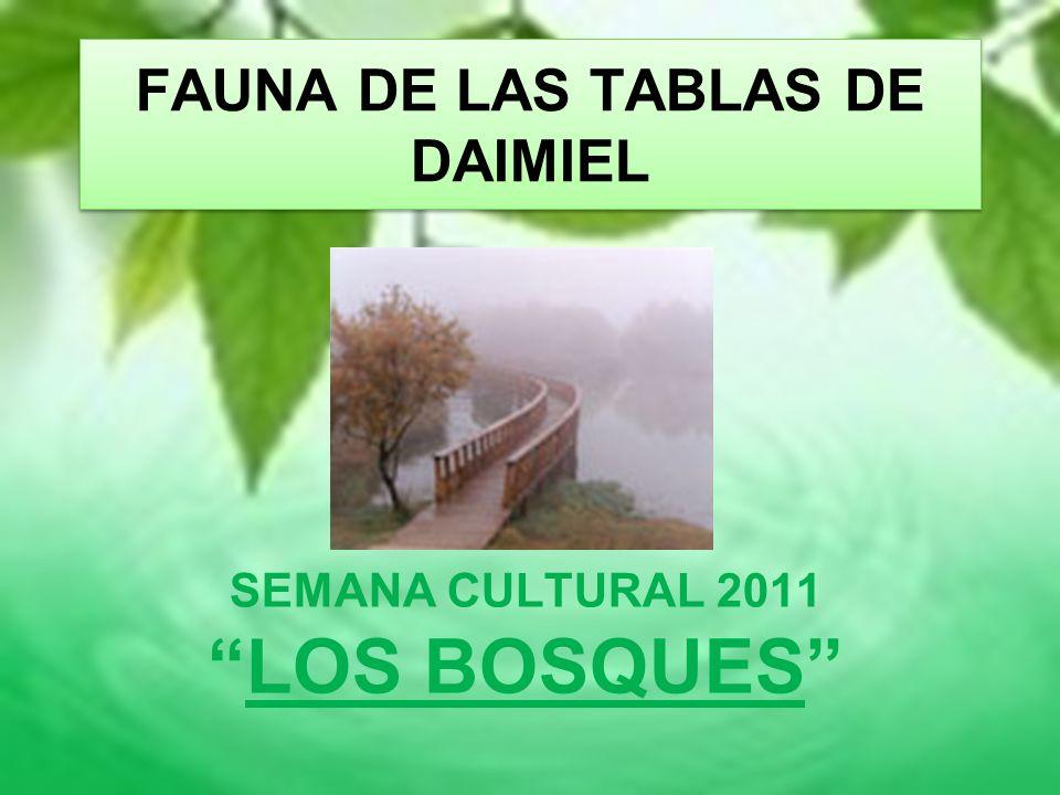 FAUNA DE LAS TABLAS DE DAIMIEL SEMANA CULTURAL 2011 LOS BOSQUES