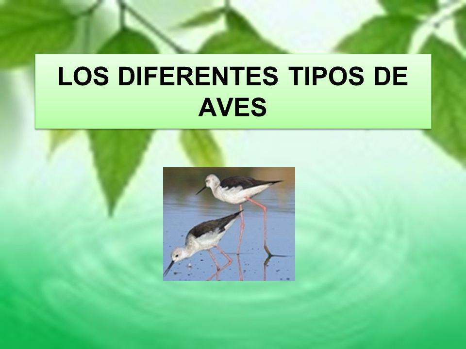 LOS DIFERENTES TIPOS DE AVES