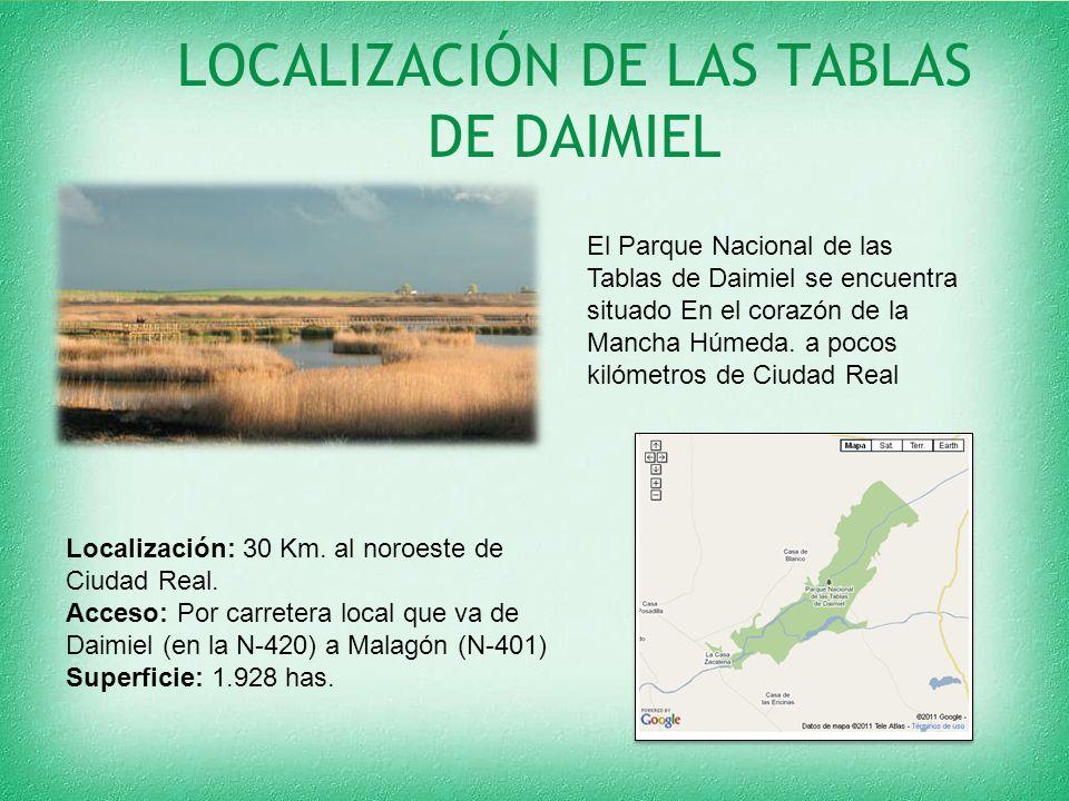 LOCALIZACIÓN DE LAS TABLAS DE DAIMIEL El Parque Nacional de las Tablas de Daimiel se encuentra situado En el corazón de la Mancha Húmeda. a pocos kiló