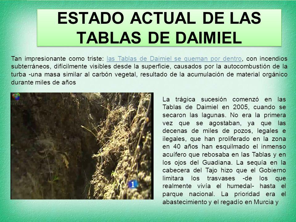 ESTADO ACTUAL DE LAS TABLAS DE DAIMIEL Tan impresionante como triste: las Tablas de Daimiel se queman por dentro, con incendios subterráneos, difícilmente visibles desde la superficie, causados por la autocombustión de la turba -una masa similar al carbón vegetal, resultado de la acumulación de material orgánico durante miles de añoslas Tablas de Daimiel se queman por dentro La trágica sucesión comenzó en las Tablas de Daimiel en 2005, cuando se secaron las lagunas.
