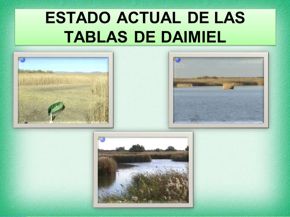 ESTADO ACTUAL DE LAS TABLAS DE DAIMIEL