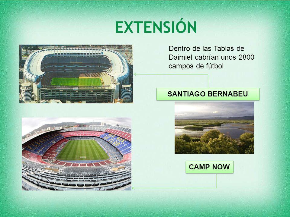 EXTENSIÓN SANTIAGO BERNABEU Dentro de las Tablas de Daimiel cabrían unos 2800 campos de fútbol CAMP NOW
