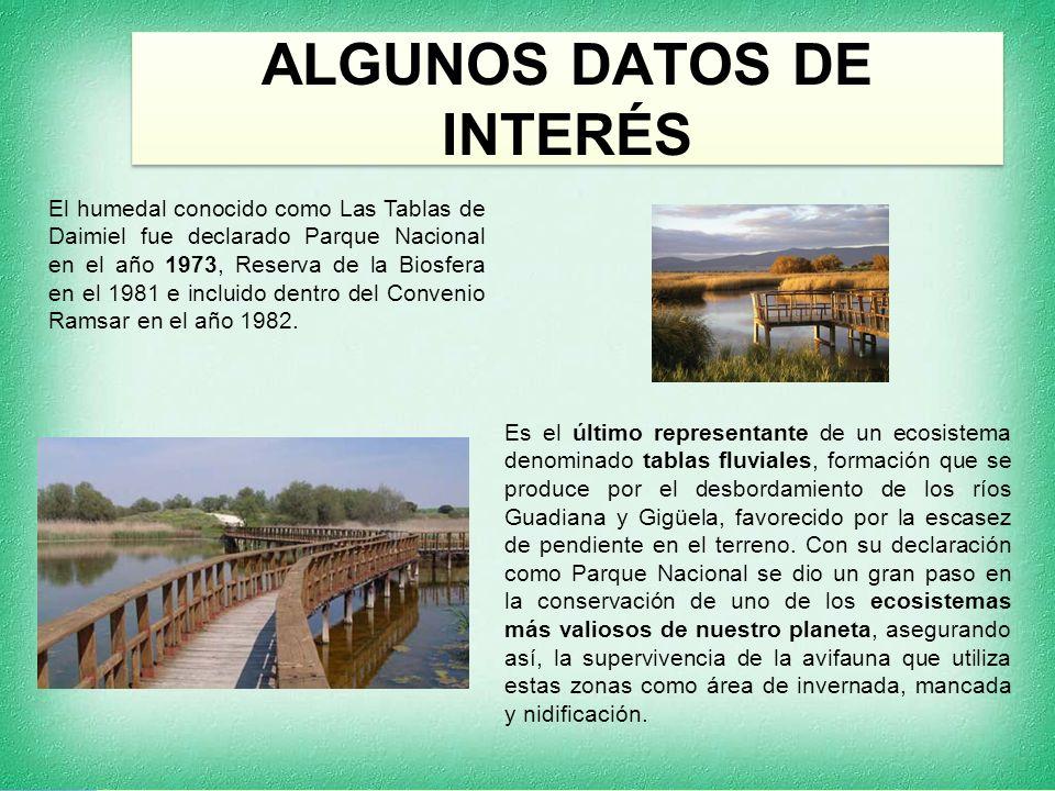 ALGUNOS DATOS DE INTERÉS El humedal conocido como Las Tablas de Daimiel fue declarado Parque Nacional en el año 1973, Reserva de la Biosfera en el 1981 e incluido dentro del Convenio Ramsar en el año 1982.