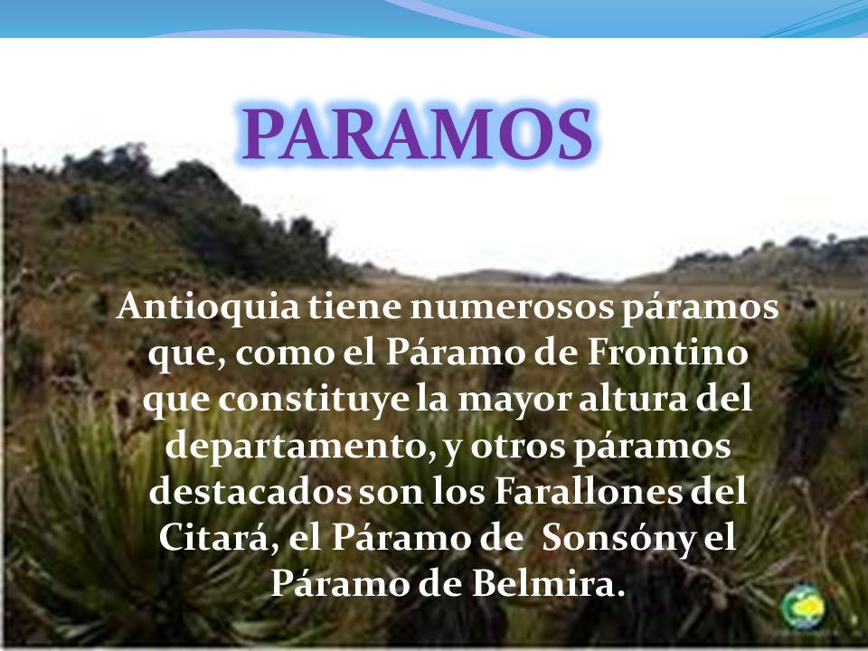 Antioquia tiene numerosos páramos que, como el Páramo de Frontino que constituye la mayor altura del departamento, y otros páramos destacados son los