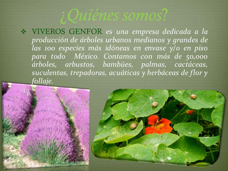 Contamos con un Banco de Semillas Forestales: Producimos para el mercado nacional e internacional.