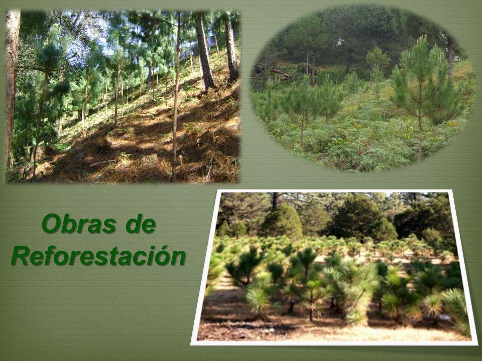 Obras de Reforestación