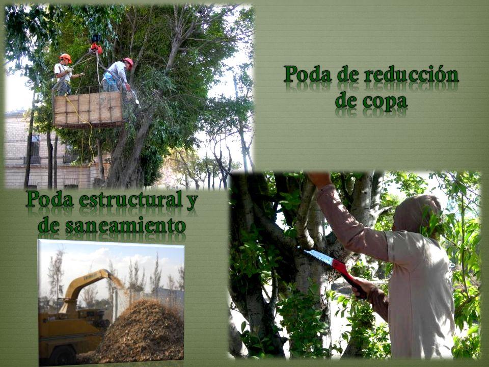 Contactanos… Correo electrónico: genfor@prodigy.net.mx Teléfonos: 01 (595) 95 50940 Fax: 01 (595) 95 50942 Lada 800: 01 (800) 71 85098 Website: http://www.grupogenfor.com.mx Blog: http://www.genfor.com.mx