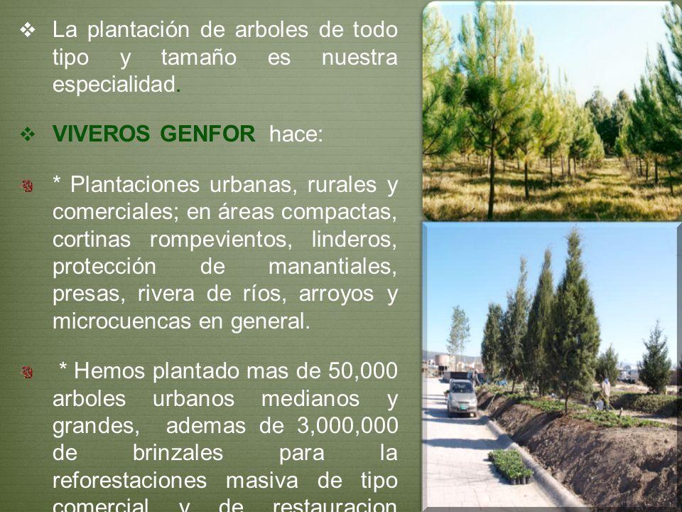 La plantación de arboles de todo tipo y tamaño es nuestra especialidad. VIVEROS GENFOR hace: * Plantaciones urbanas, rurales y comerciales; en áreas c
