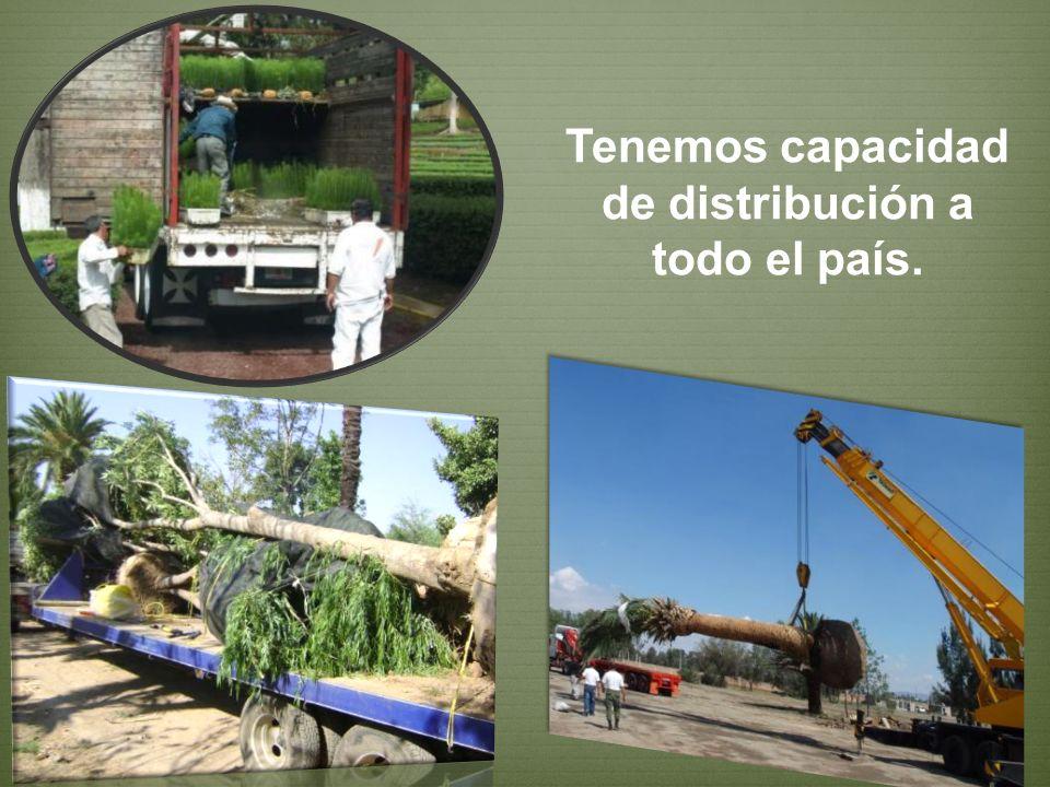 Durante los 25 años que tenemos en las empresas de GENFOR se han realizado mas de 100 obras y proyectos forestales, de arboricultura y jardinería ambiental.