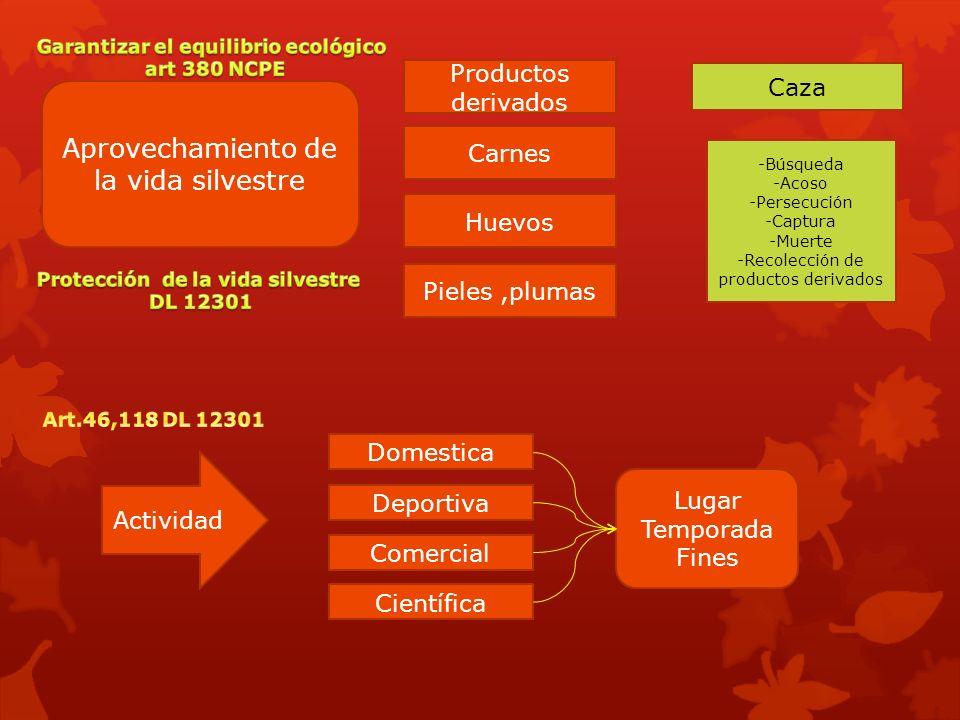Aprovechamiento de la vida silvestre Caza -Búsqueda -Acoso -Persecución -Captura -Muerte -Recolección de productos derivados Carnes Productos derivado