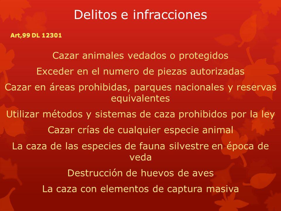 Delitos e infracciones Cazar animales vedados o protegidos Exceder en el numero de piezas autorizadas Cazar en áreas prohibidas, parques nacionales y