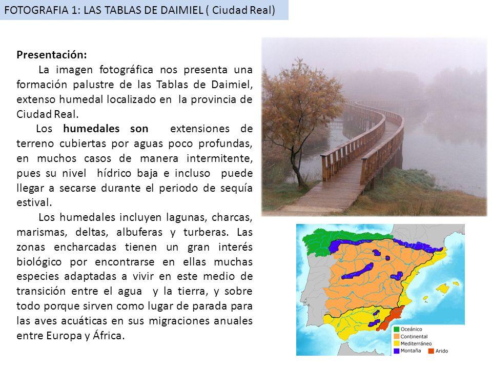 FOTOGRAFIA 1: LAS TABLAS DE DAIMIEL ( Ciudad Real) Presentación: La imagen fotográfica nos presenta una formación palustre de las Tablas de Daimiel, e