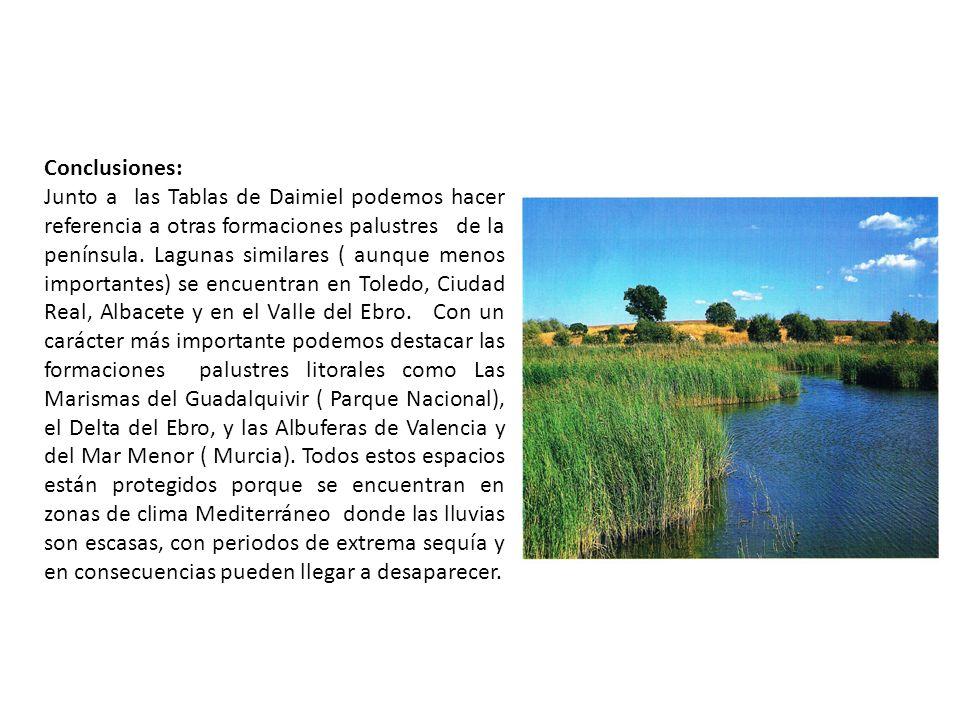 Conclusiones: Junto a las Tablas de Daimiel podemos hacer referencia a otras formaciones palustres de la península. Lagunas similares ( aunque menos i