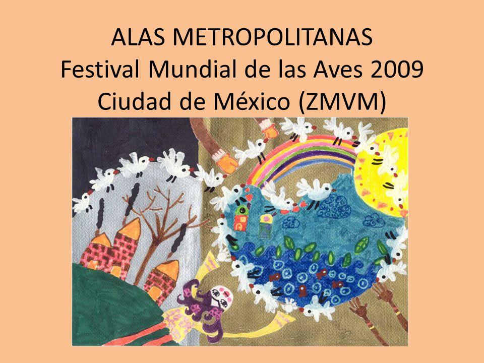 OBJETIVOS Posicionar el Festival Mundial de las Aves en la Zona Metropolitana del Valle de México (ZMVM), como un evento dinámico y educativo en donde confluyan diversas actividades enfocadas hacia el conocimiento y conservación de las aves.
